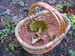marketing mushrooms.jpg